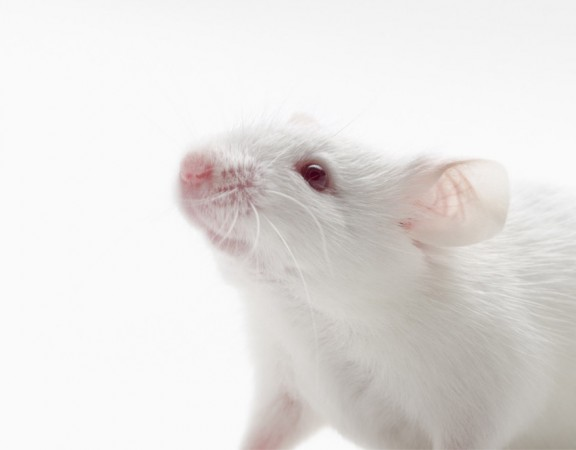 animal-testing-toxfinder